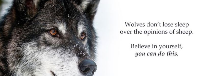 Wolves dont lose sleep opinions sheep life quotes sayings pictures